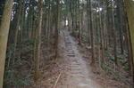 宝登山山頂付近の登り